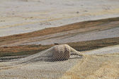 Fishing net on the beach. — Stock Photo