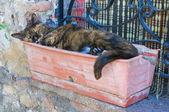 Sleepy cat. — Stock Photo