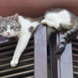 Cat climbing window. — ストック写真