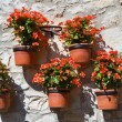 Flowerpots. - Stock Photo
