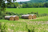 Hay bale field. — Stock Photo