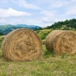 Hay bale field. — Stock Photo #20857341