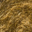 Stock Photo: Hay bale.