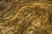 Hay bale. — Stock Photo