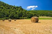 Hay bale field. — Stock Photo