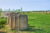 Archaeological Park. Metaponto. Basilicata. Italy. — Stock Photo