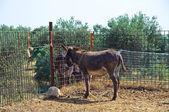 Donkeys. — Stock Photo