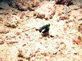 Variable Neon SeaSlug — Stock Photo