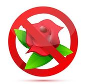 No flowers illustration design — Stock Photo
