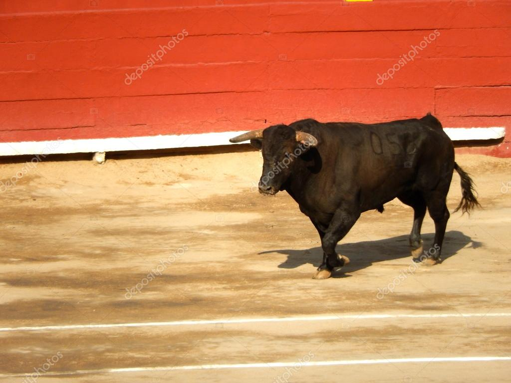 Spanish Bull Spanish Bull in The