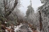 Frozen  path — Stock Photo