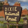 Dixie National Forest — Stock Photo