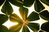 Grunge background with shape of flowers — Stock Photo