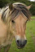 Pretty Horse — Stock Photo