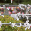 Omikuji at Shinto temple in Japan — Stock Photo #19000917