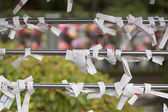 Omikuji at Shinto temple in Japan — Stock Photo