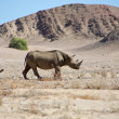 A wild black rhino in the Kaokoland. — Stock Photo