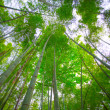 Sunlight shining through bamboo — Stock Photo #27299513