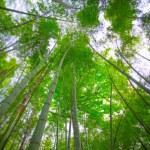 Sunlight shining through bamboo — Stock Photo