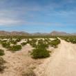 Kaokoland desert road — Stock Photo