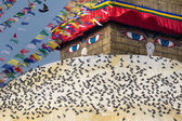 Pigeons and the Bodhnath stupa — Stock Photo