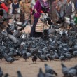 Elderly Masked woman feeding pigeons — Stock Photo
