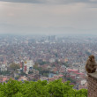 Постер, плакат: Monkey at the Swayambhunath temple in Nepal