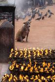 Kathmandu yanan mumlar — Stok fotoğraf