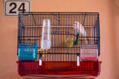 Little Bird in his cage — Stock Photo