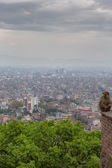 Monkey at the Swayambhunath temple in Nepal — Stock fotografie
