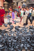 A group of pigeons early in the morning at the Boudhanath Stupa — Stock Photo