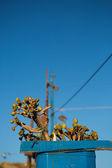 青い塗られた花鍋および若い植物は家の屋根の上 — ストック写真