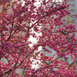 Stock Photo: Tree in blossom in the streets of Shanghai