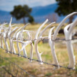 Deer Antlers on a fence, Nevada — Stock Photo