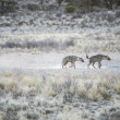 Stock Photo: Group of spotted Hyaenas in Kalahari Desert