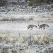 Group of spotted Hyaenas in the Kalahari Desert — Stock Photo
