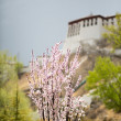Flowers with blurred view of the Potala Palace, Lhasa — Stock Photo