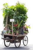 человек, велоспорт и носить много цветов и растений на его велосипеде — Стоковое фото