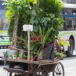 Man cycling and carrying a lot of flowers and plants on his bicy — Stock Photo #35840125