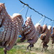Sun dried Octopus , traditional fishing in Greece — Stock Photo