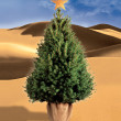 Christmas tree in the desert — Stock Photo