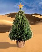 Christmas tree in the desert — Stock Photo