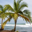 Постер, плакат: Coconut trees and big sea waves in Panama