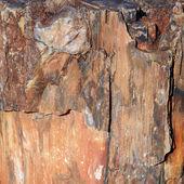 Un pedazo de madera petrificada — Foto de Stock