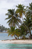 Coconuts on Paradise island — Stock Photo