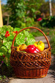 Basket qith harvest — Stock Photo