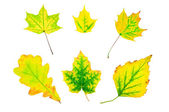 Autumn green and yellow leaves — Stock Photo