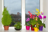 Orchids in the pots — Stock Photo