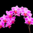 Stock Photo: Branch of orchids