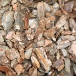 Stock Photo: Pine bark chips texture